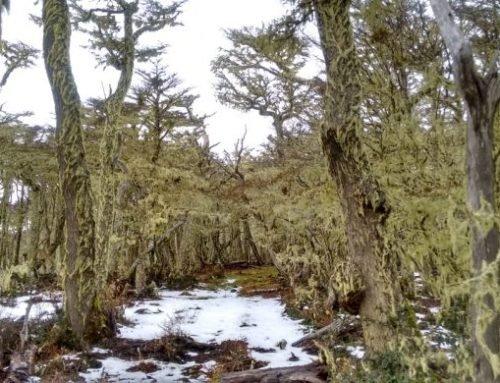 Travesía Seno Otway – Estrecho De Magallanes